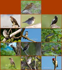 image of 2013 Bird Calendar