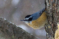 bird blog group thumbnail